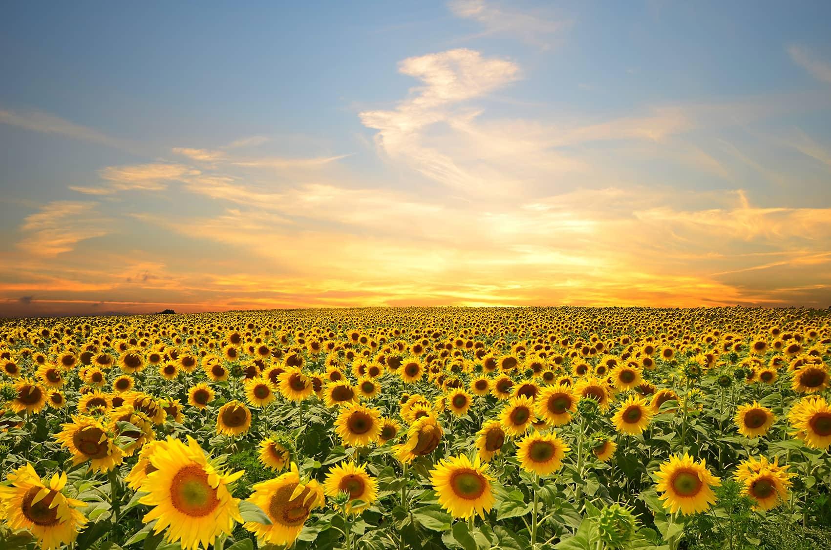 Tranh dán tường phong cảnh hoa lá
